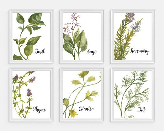 Herbs Art Watercolor Herbs Kitchen Wall Art Cooking Art