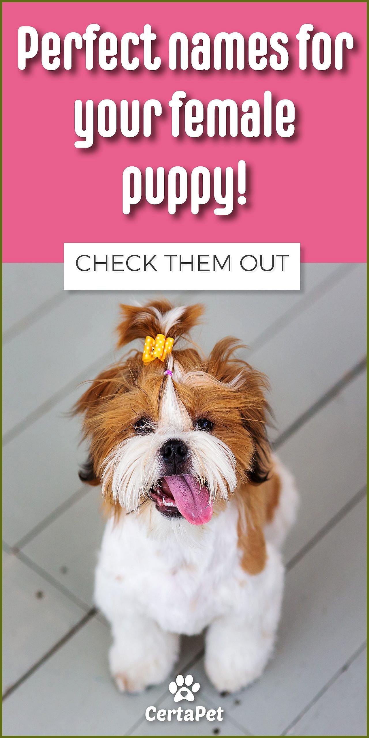Pin By Myrna Napier On Diy Dog Stuff In 2020 Female Dog Names