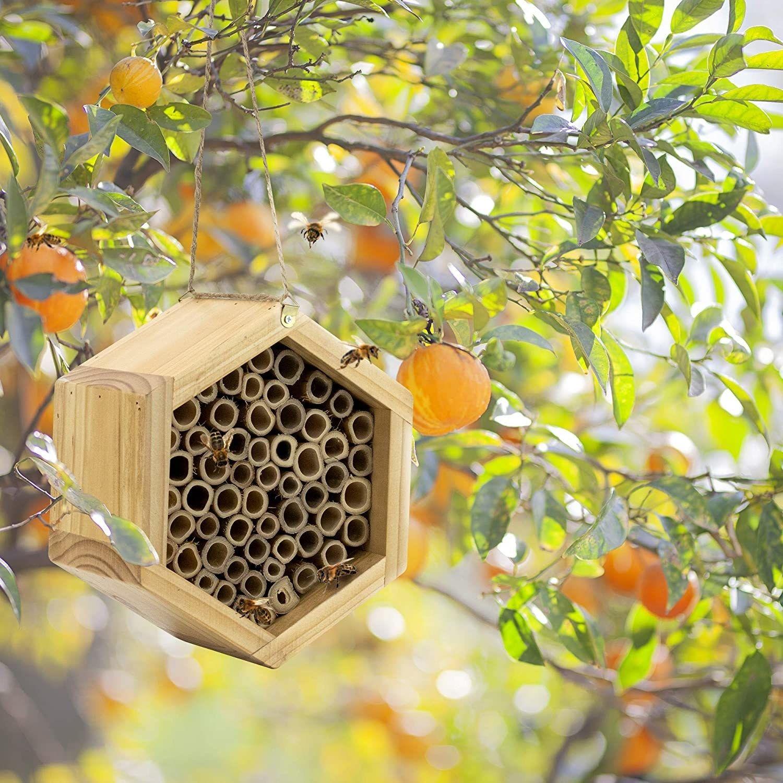 A bamboo mason bee house to encourage this buzzing