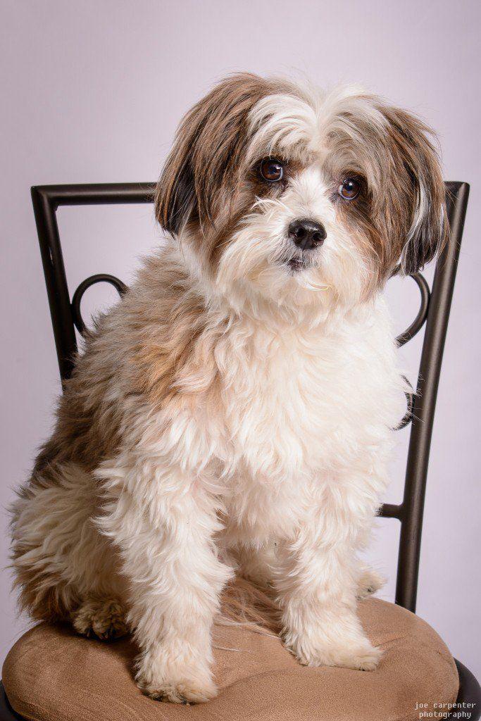 Kimola Family Friendly Dogs Dog Breeds Dogs
