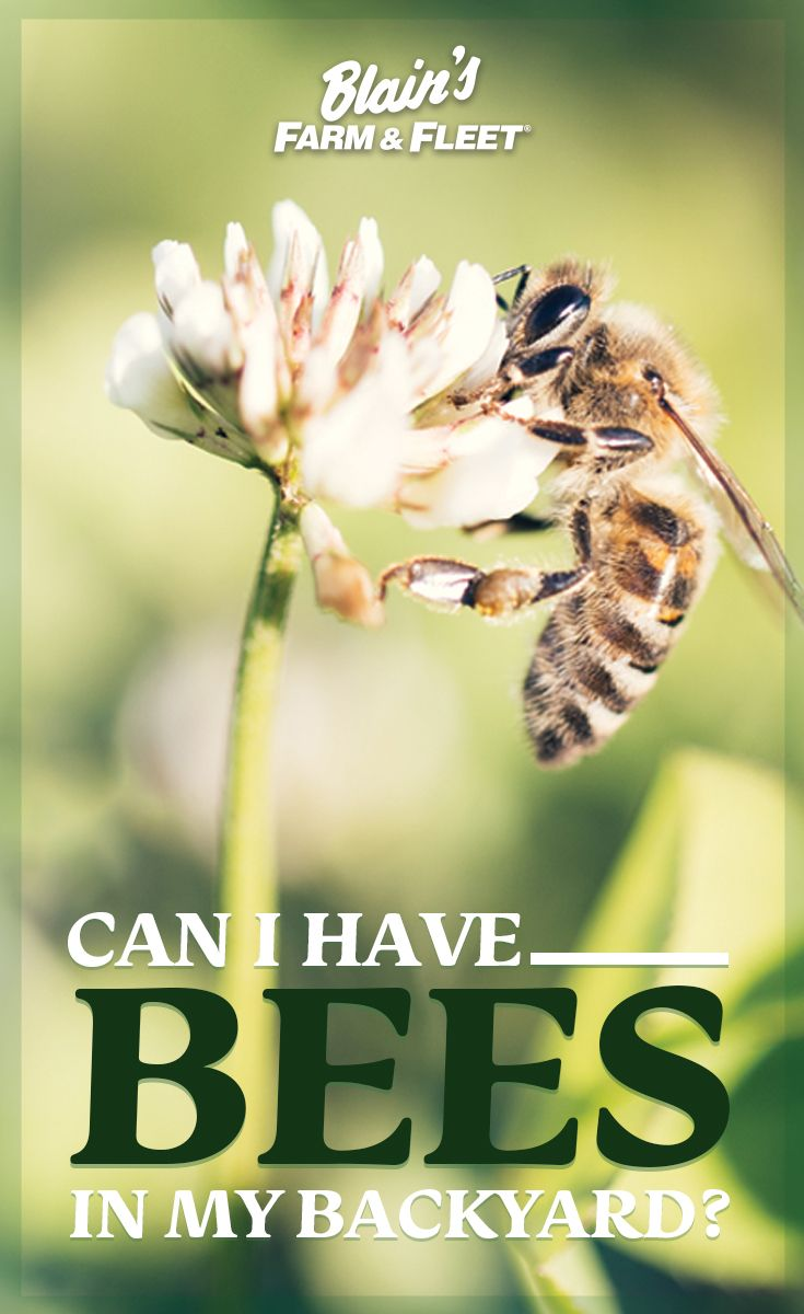 Can I Have Bees in My Backyard? (With images) | Backyard ...