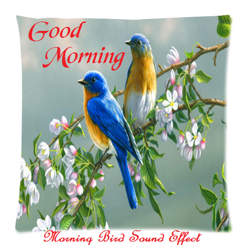 Khushi For Life Lovely And Sweet Good Morning Bird Wishes Images