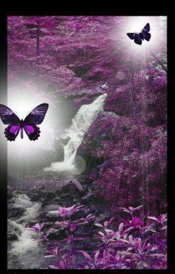 Butterflies - Butterflies