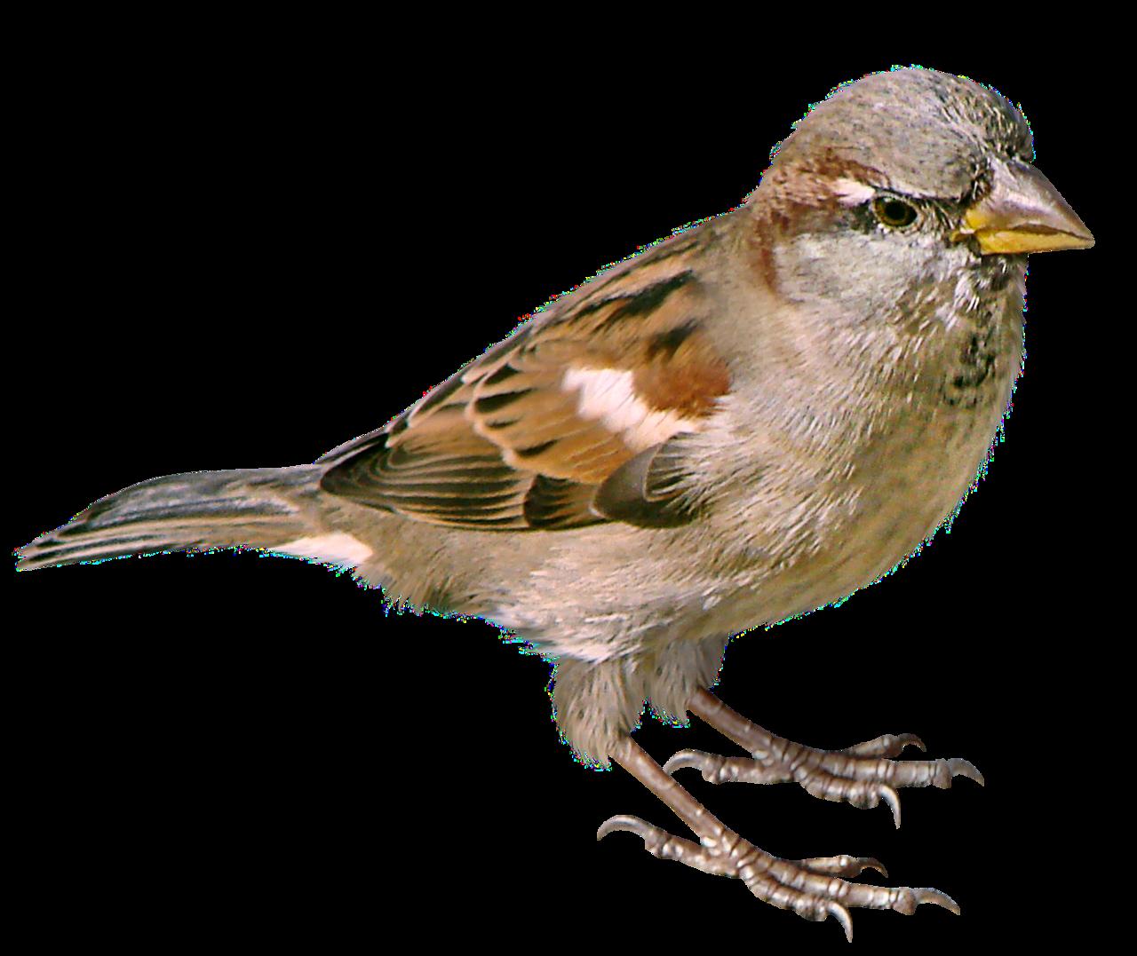 Силы россии, картинка птицы для детей на прозрачном фоне