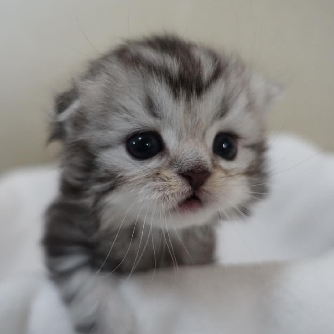 Pin Von Indrani Mukherjee Auf Cats In 2020 Baby Katzen Niedliche Tierbabys Susse Tiere
