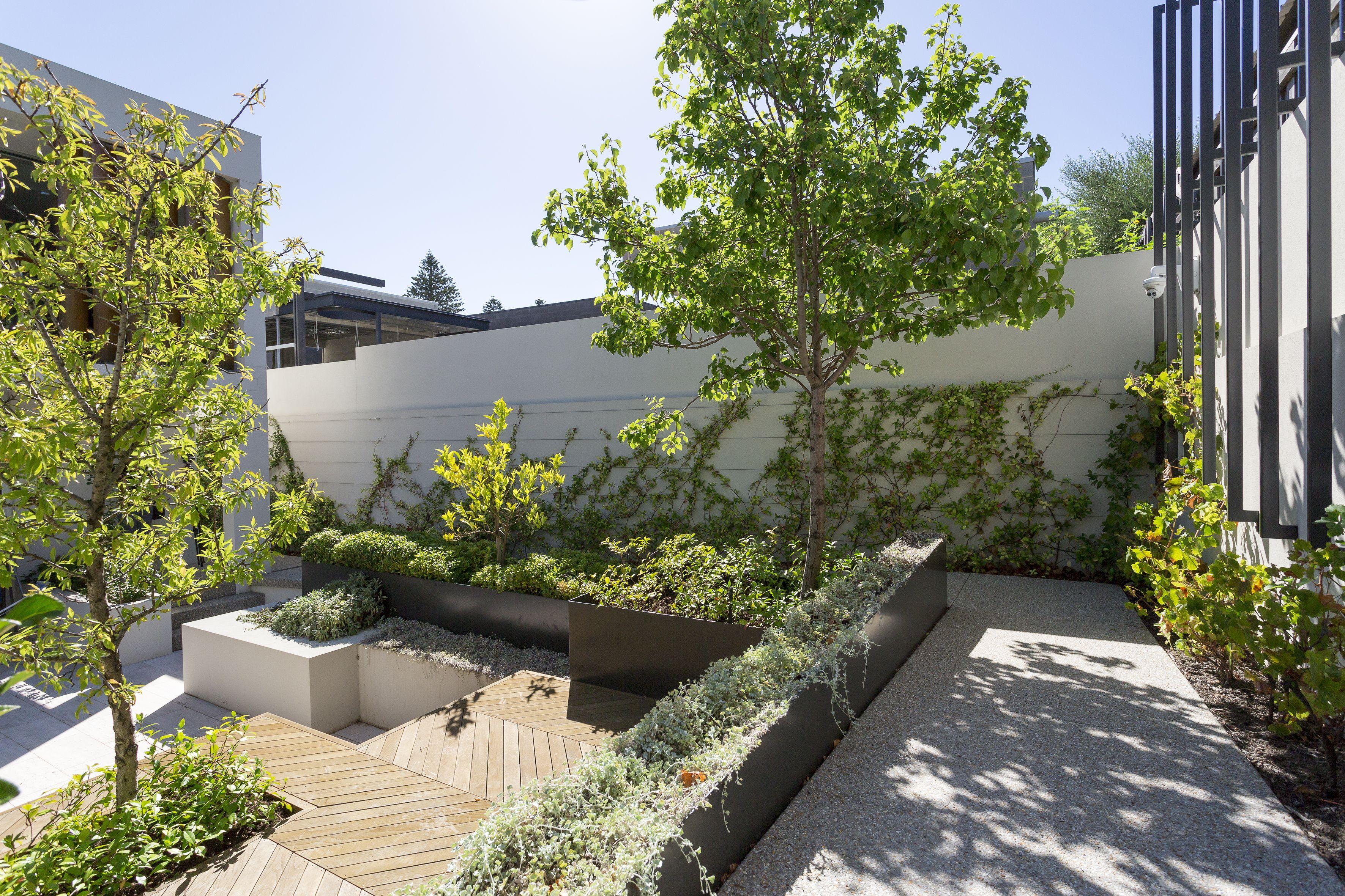 Wembley residence | Garden hedges, Small garden, Backyard