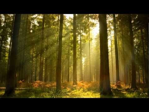Background Music Instrumental Piano Nature Relax Daily N 005 Youtube Forest Art Forest Background Forest Landscape