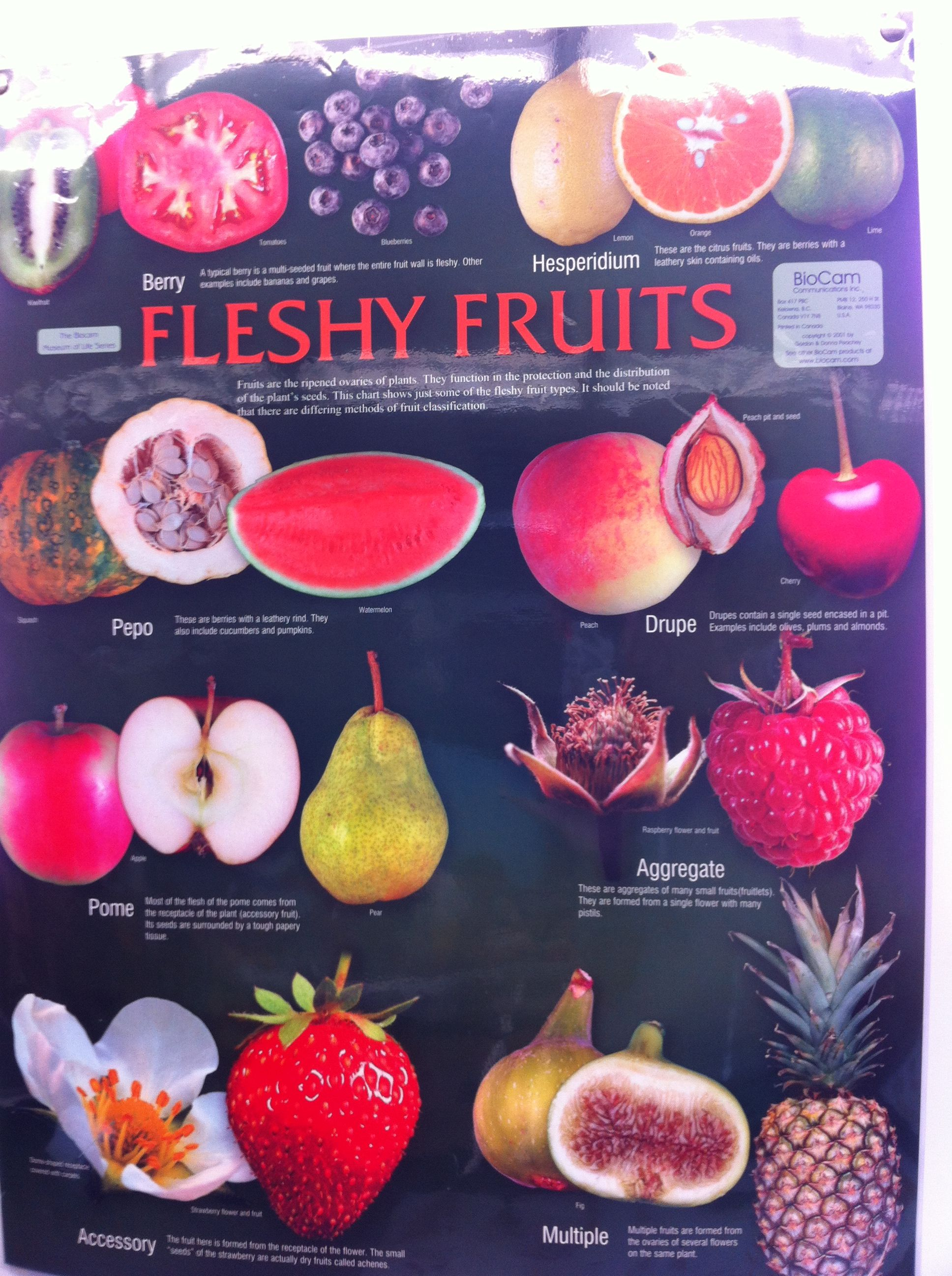 Fleshy Fruits Poster