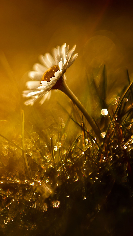 Flower Rain Bokeh White Orange Photooftheday Qhdwallpapers