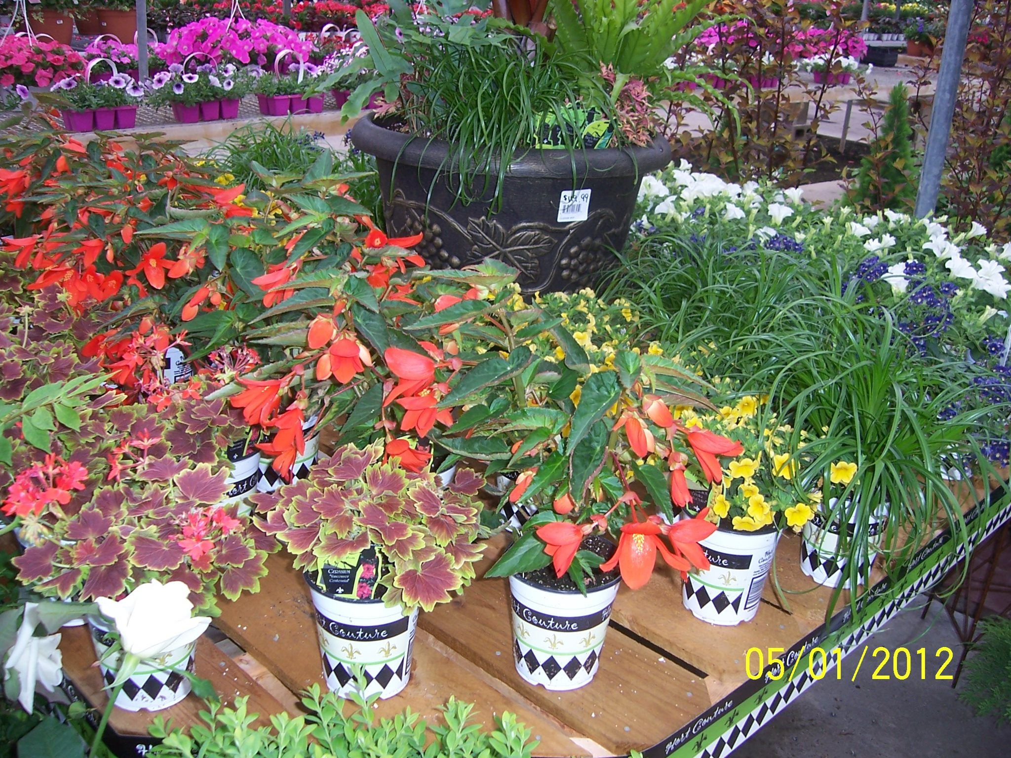 f7df3748683d7d0b5457a75262889bff - Kennedy's Country Gardens Scituate Ma