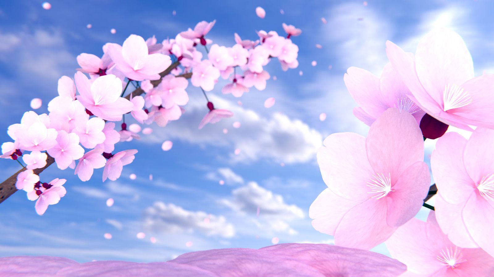 cherry blossom flower desktop