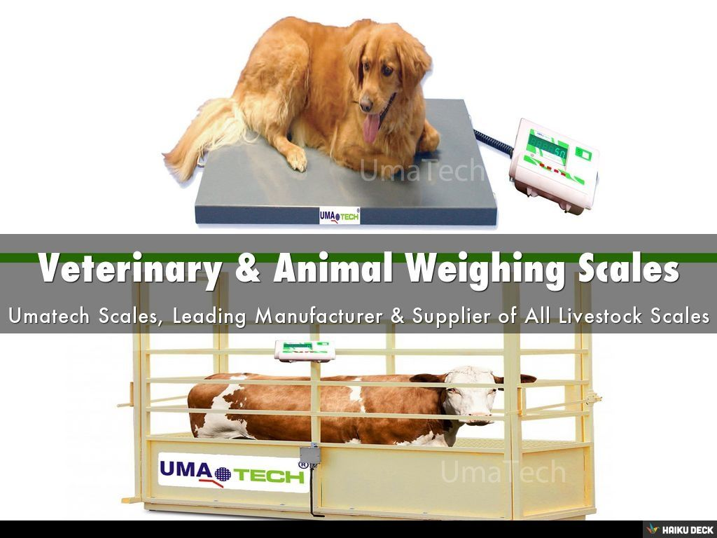 Veterinary Animal Weighing Scales Manufacturer Tamil Nadu By
