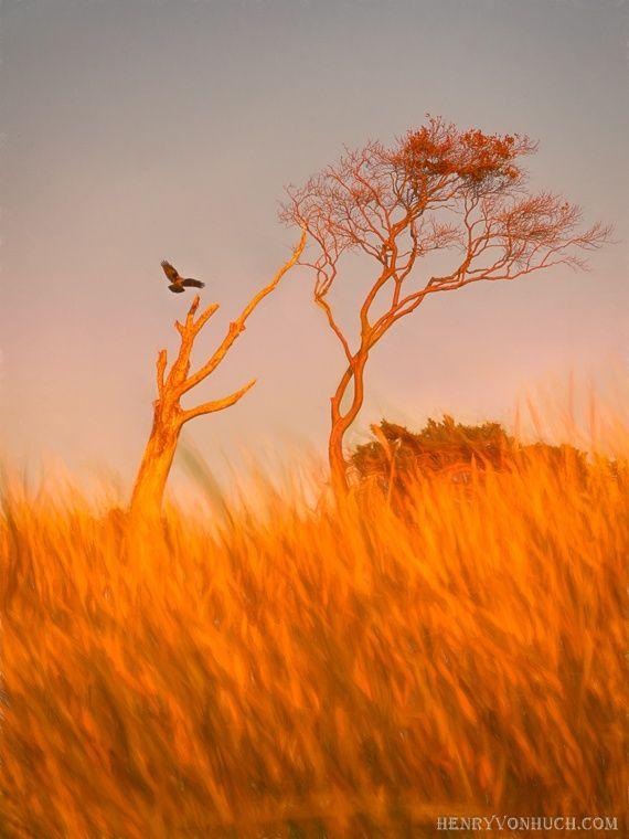 AHRENSHOOP WEST SHORE SUNSET BIRD by Henry von Huch on 500px