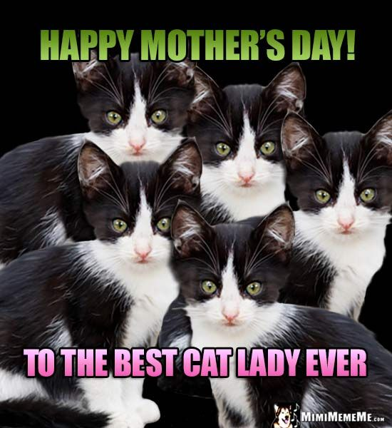 Funny Kitten Siblings Say Happy Mother S Day To The Best Cat Lady Ever Happy Mom Day Mothers Day Memes Funny Happy Birthday Cat