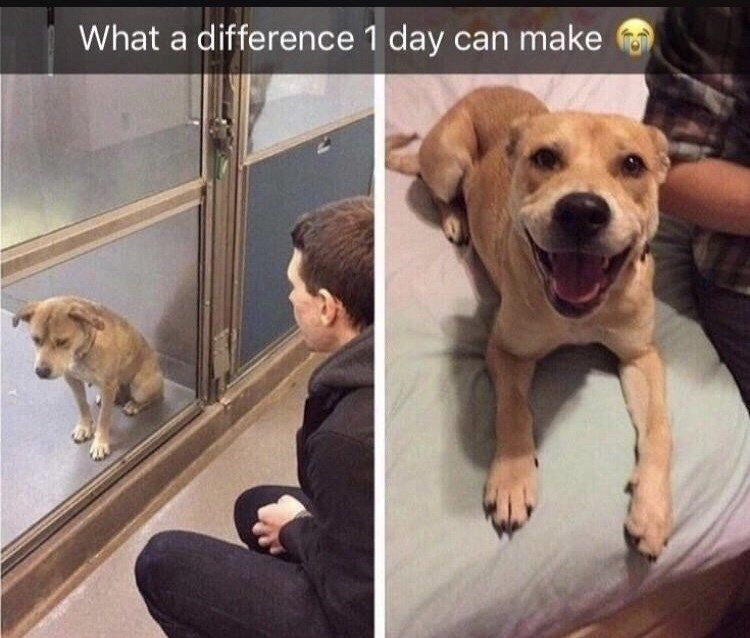 Funny Memes Proving That Animals Are Far Superior To Humans Wholesome Pictures Animal Memes Animals