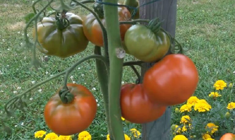 Épinglé sur astuces de jardinage