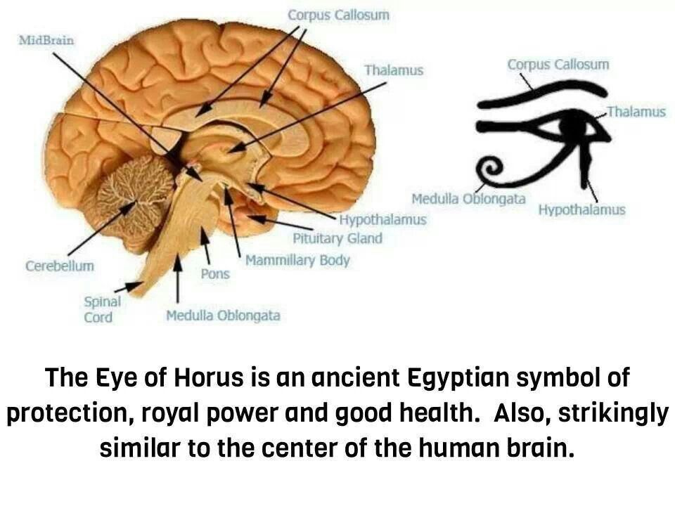 Pineal Gland Diagram Tattoo - Circuit Connection Diagram •