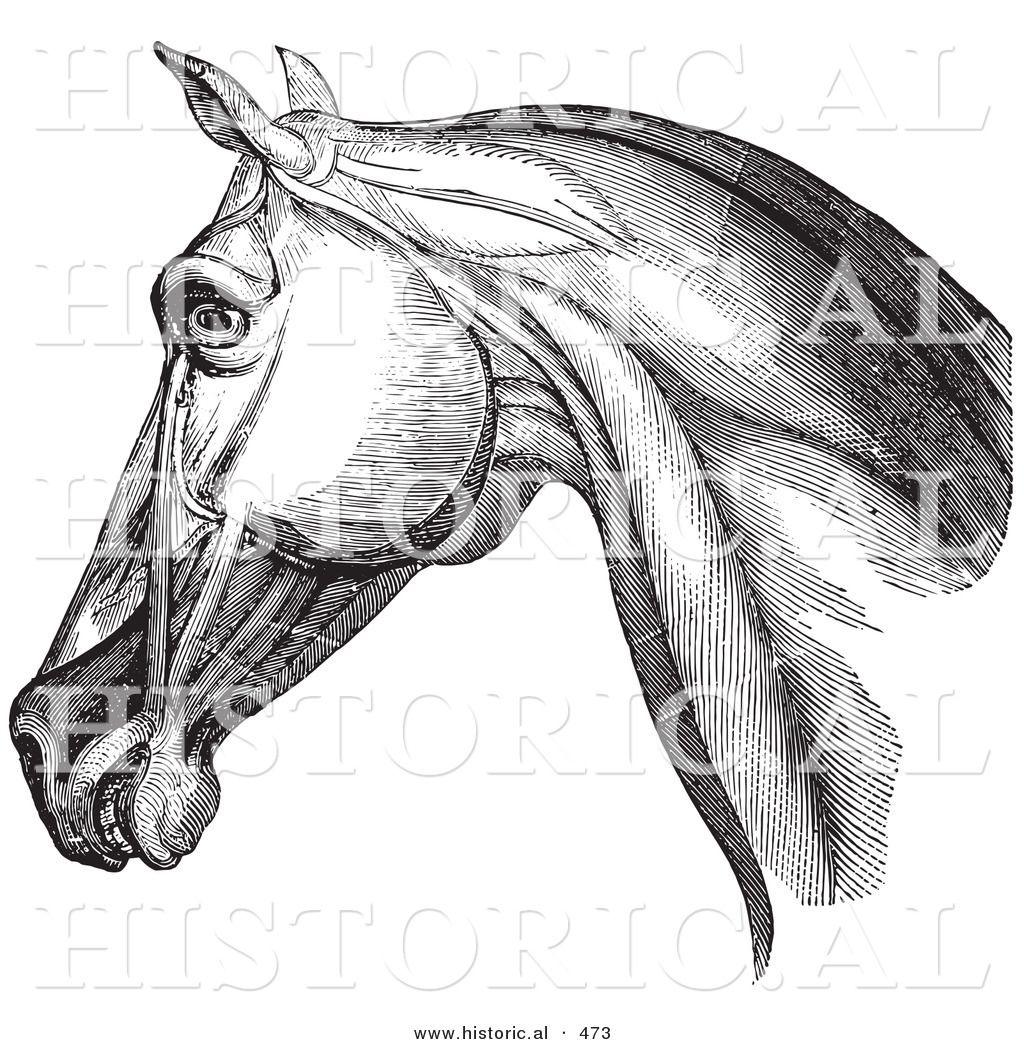 horse images in black and white - Google Search | animals ...