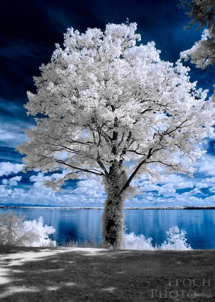 Infrared photo - and great article on intro to infrared photography and tips from Bob Vishneski, Mansurovs Photography site