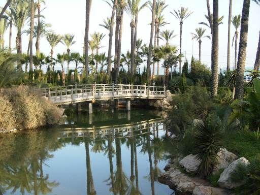 Piso de estudiantes en Rambla de Alicante. España. El Palmeral pequeño bosque de palmeras situado a la salida de la ciudad, en dirección a Elche. Situado frente al mar, en el barrio de San Gabriel, este palmeral es uno de los parques más bonitos de la ciudad, donde abundan las palmeras típicas de esta zona de la provincia.