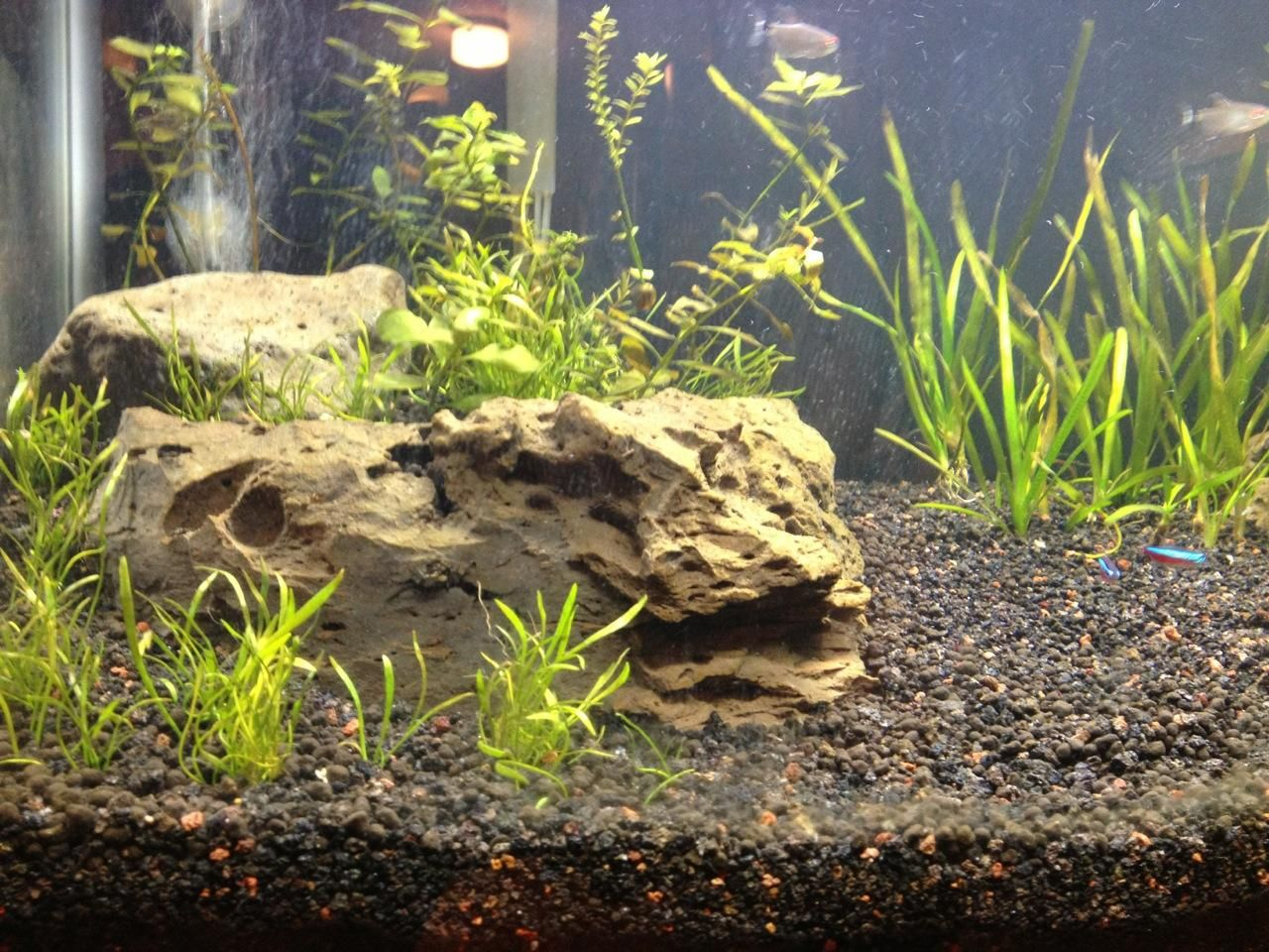 Substrate Support Dividers Aquascape Substrate Supportive