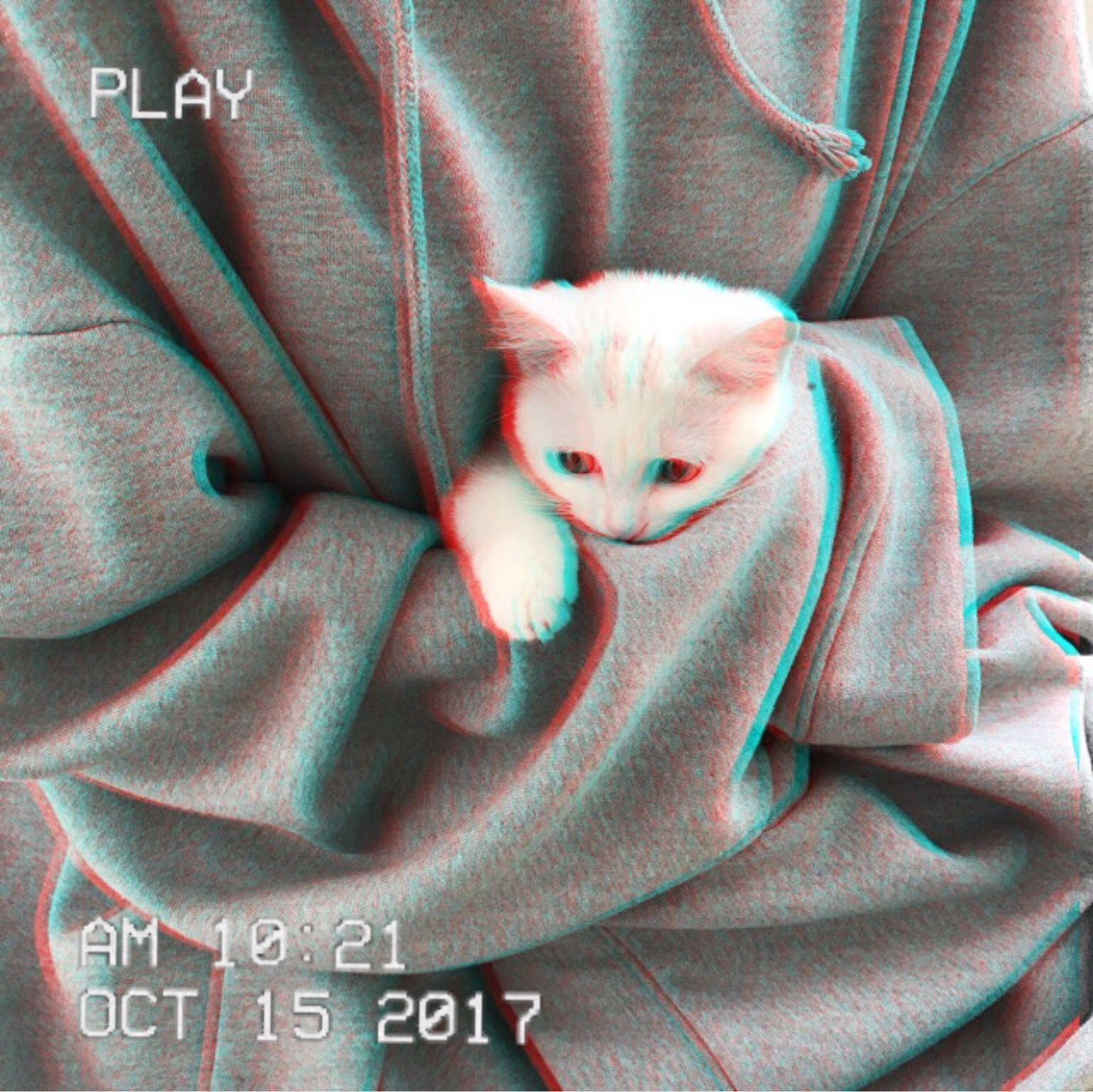 ᴘɪɴᴛᴇʀᴇsᴛ ʟᴜɴᴀᴛɪᴄᴇᴇᴇ Fotos de gatos fofos, Gatinhos