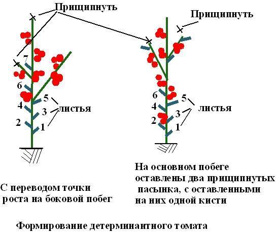 Выращивание томатов в теплице из поликарбоната: советы агрономов.