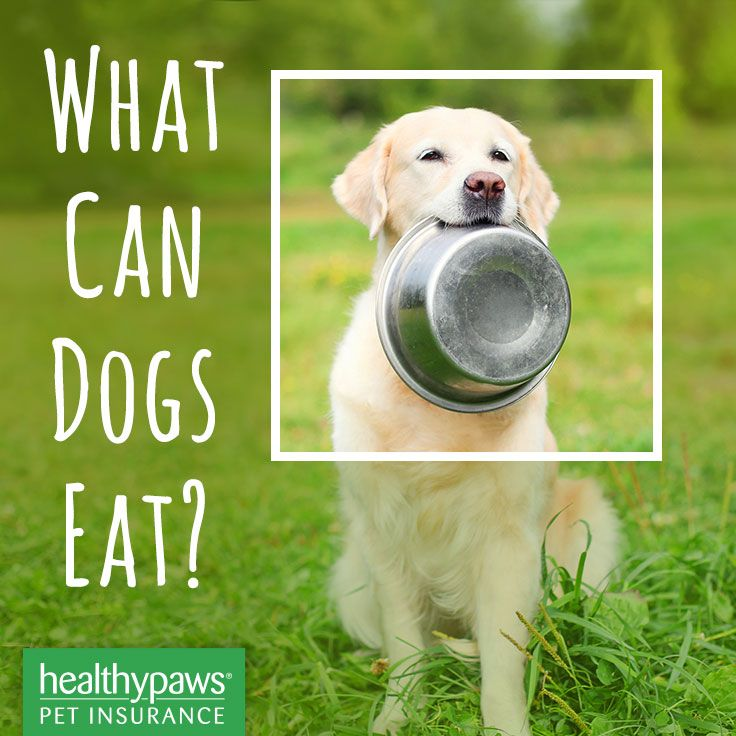 What Can Dogs Eat Can Dogs Eat Dangerous Foods For Dogs Dog Eating