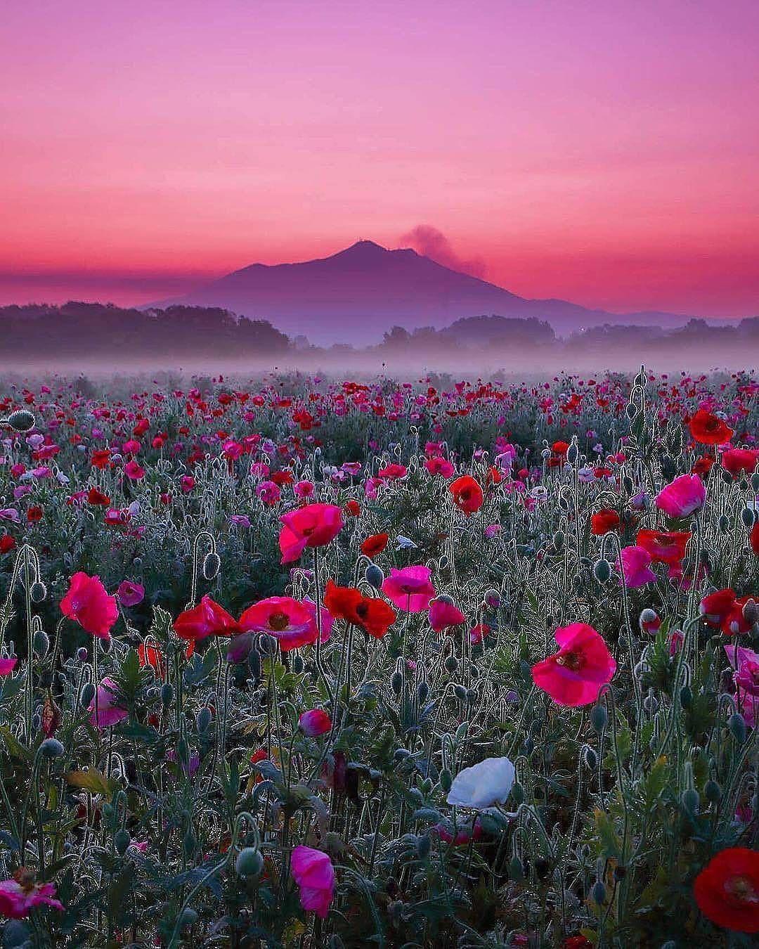 4 079 Likes 27 Comments Veranda Magazine Verandamag On Instagram Flower Wonderland Photo Nature Photography Beautiful Nature Beautiful Landscapes