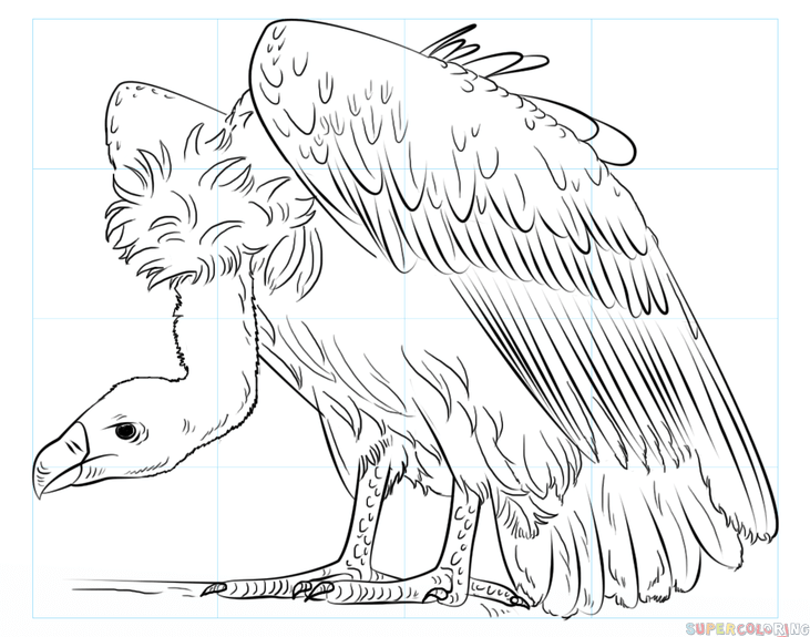 How To Draw A Vulture Step By Step Drawing Tutorials Drawing Tutorial Coloring Pages Step By Step Drawing