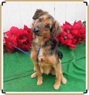 2 3 17 Urgent Marietta Ga Saluki Mix Meet Zorro A Dog For
