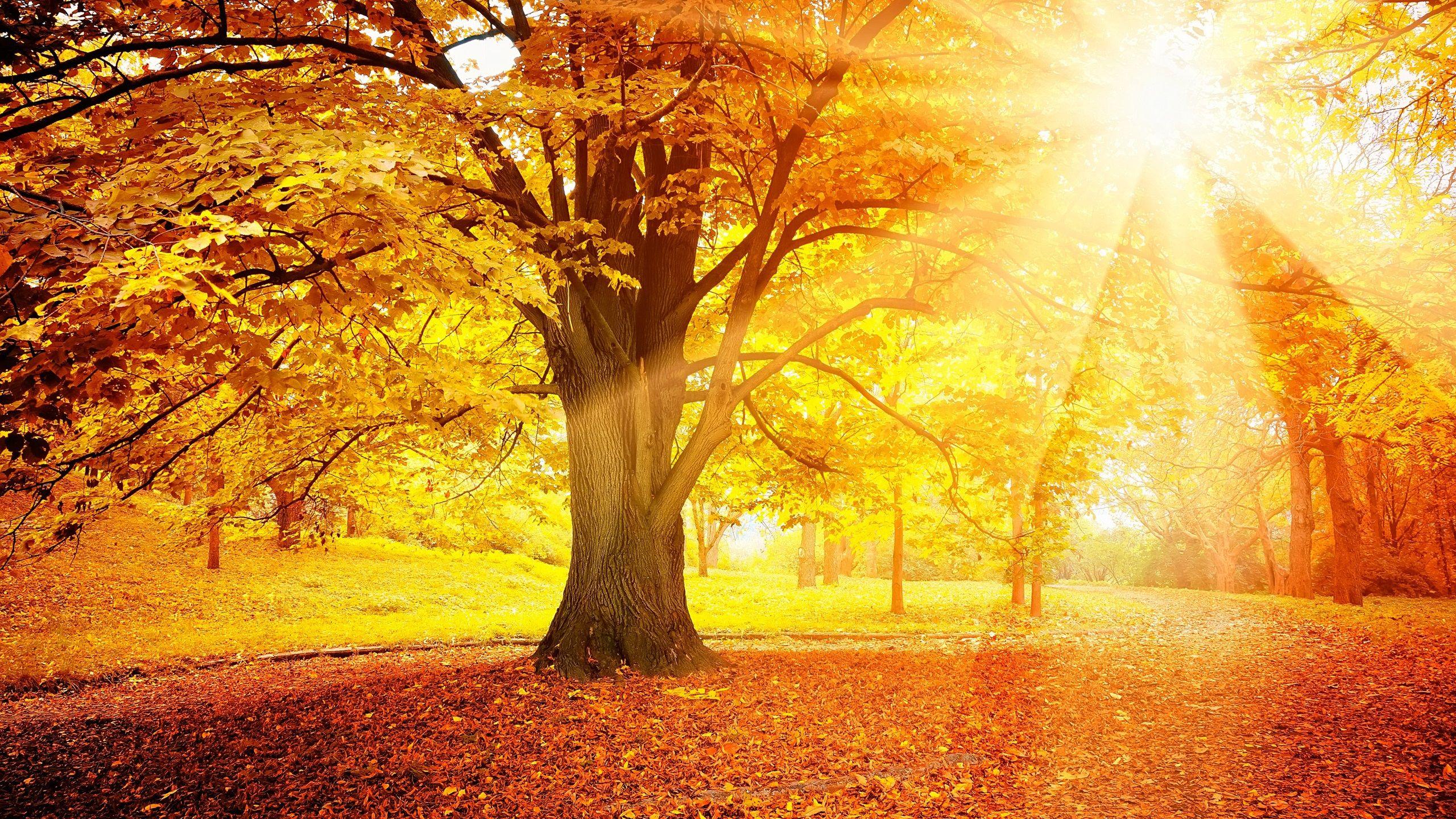 Solar Autumn Sunset Summer Painting Fall Wallpaper Autumn Forest