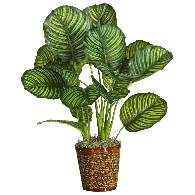 Tåliga gröna växter inomhus