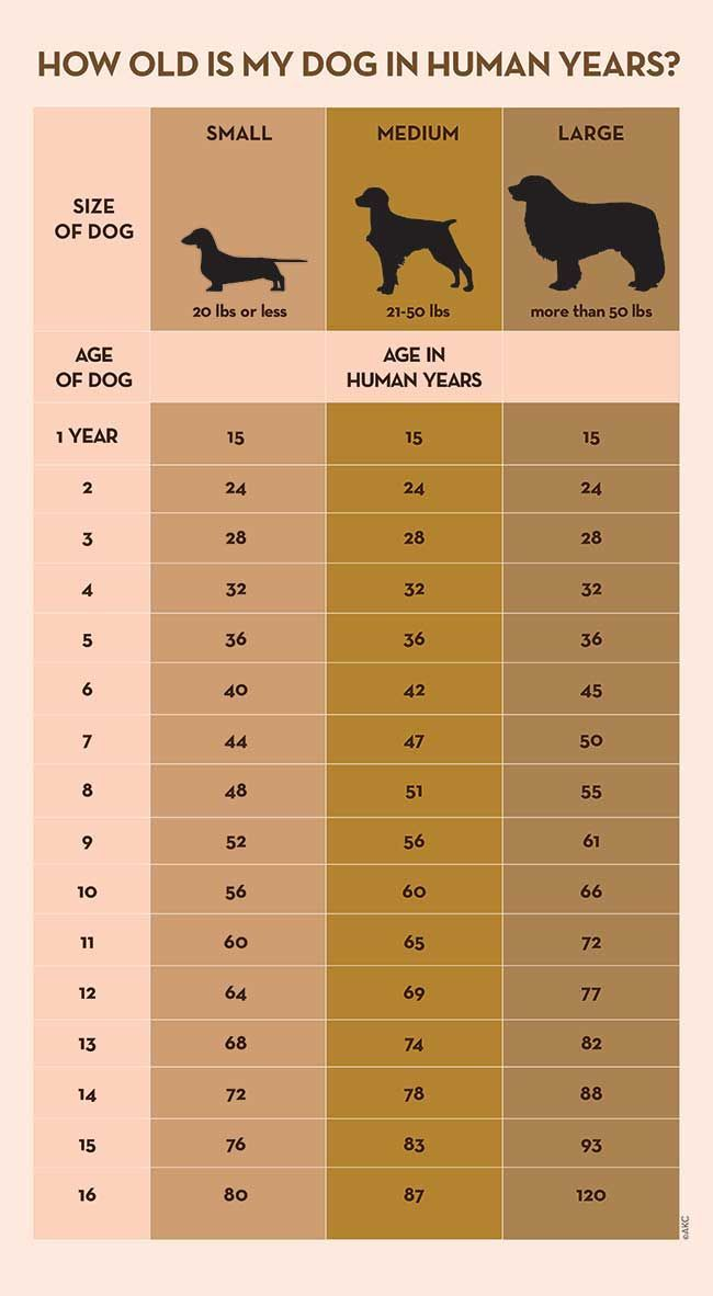 Your Dog\u0027s Age In Human Years A Conversion Chart Tinni\u0027s couture