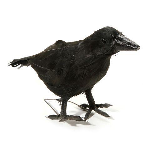 695 creepy black crow halloween