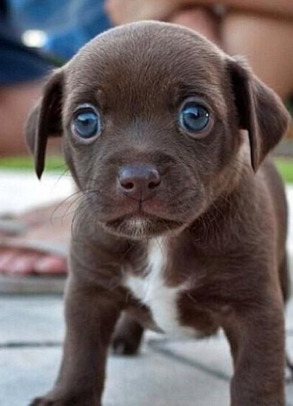 Darum Konnen Wir Den Sussen Blicken Unseres Hundes Nicht
