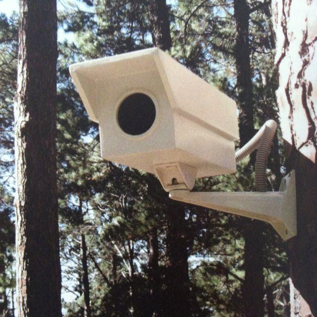Bird Watcher - Porky Hefer