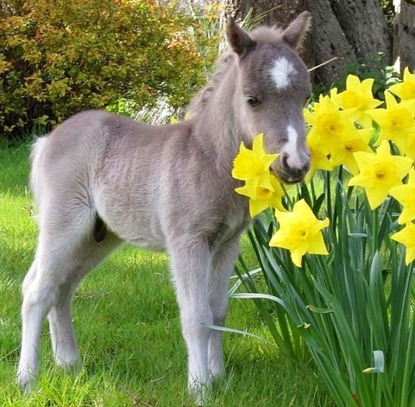 Mini horse via When Nature Calls on Facebook