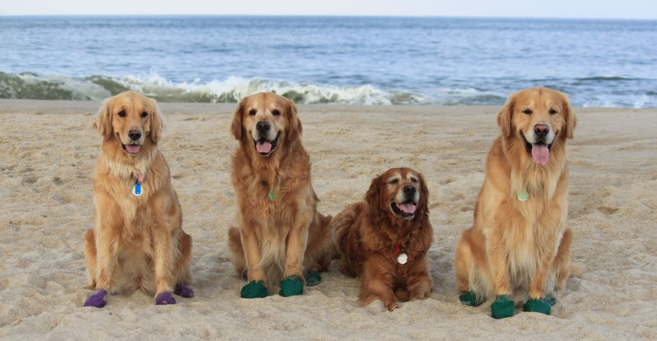 Keep your doggie protected with paws rubber dog boots