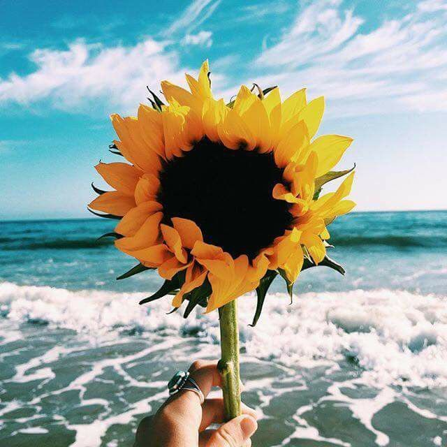 Pin By Baylee Easterling On Imagenes Bellas Sunflower Wallpaper Nature Photography Sunflower Pictures
