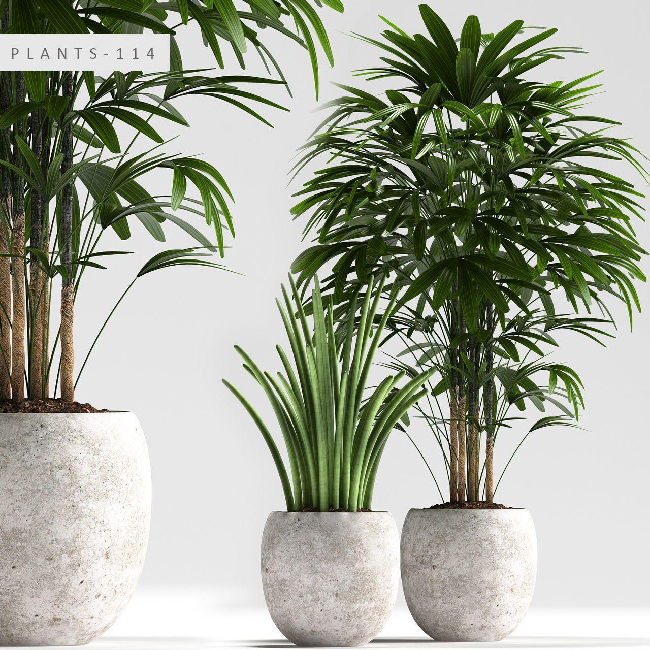 Piante Da Interno 3d.3d Plants Model 348 Free Download Nel 2020 Architettura