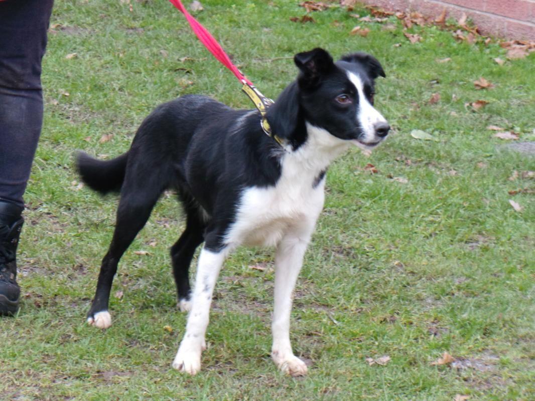 Luna Dogs Trust Dogs Rescue Dogs
