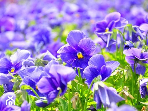 Rosliny Cieniolubne W Ogrodzie Jakie Kwiaty Krzewy I Drzewa Wybrac Do Cienia Homebook In 2020 Japanese Flowers Viola Flower Flower Meanings