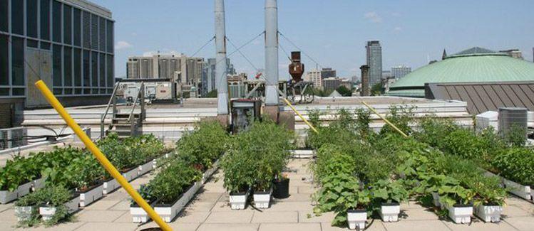 Drip Irrigation Design For Vegetable Garden Garden Ideas - Rooftop vegetable garden ideas