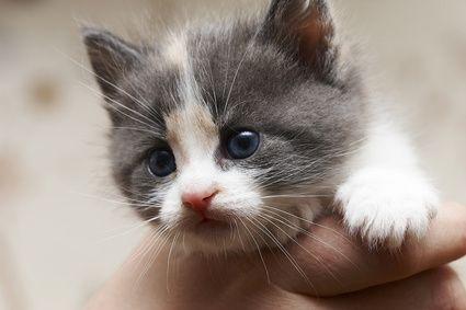 What Does A Five Week Old Kitten Need Newborn Kittens Kitten