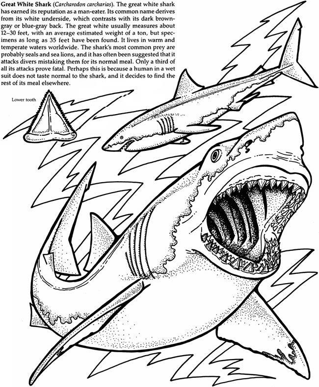 Welcome to dover publications school resources for Immagini squali da colorare