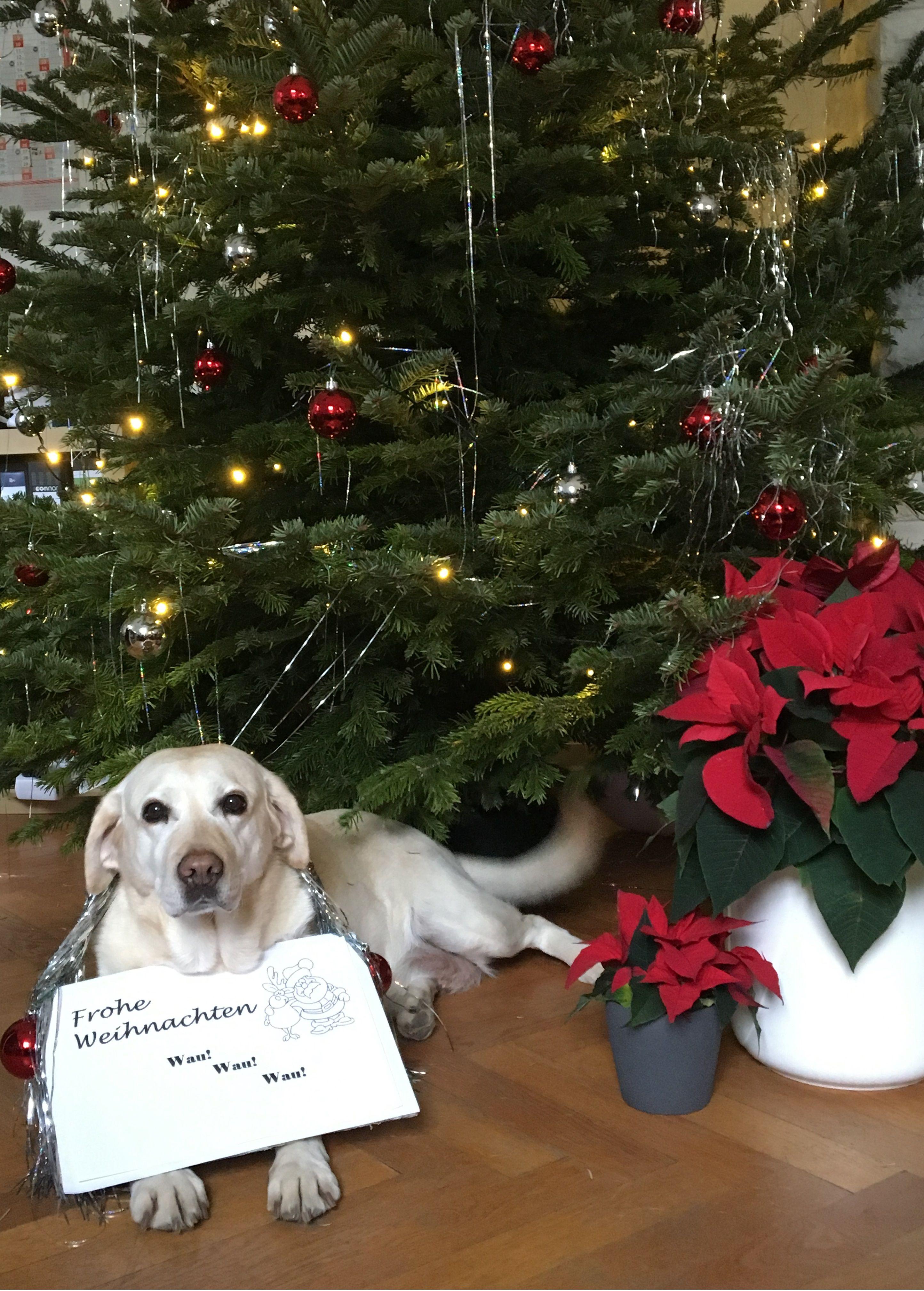 briefkasten #post #bürohund #hund #labrador #firmenmaskottchen ...