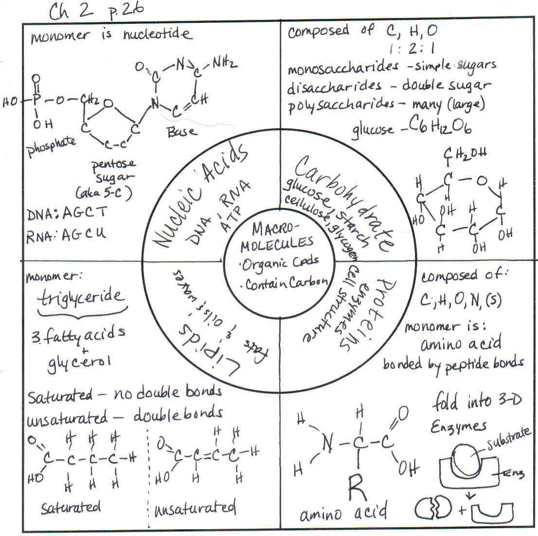 macromolecules graphic organizer Google Search – Macromolecule Worksheet