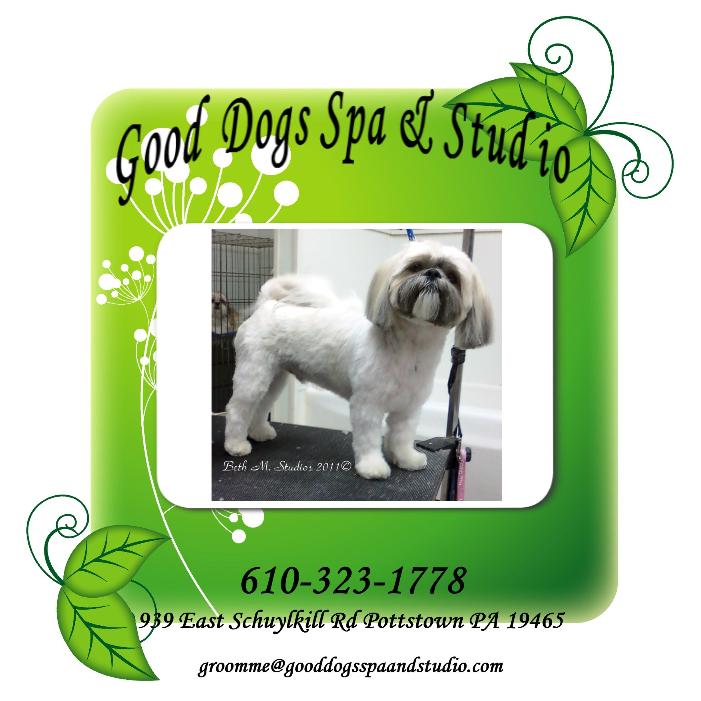 Alex Long Pet Style Gooddogsspaandstudio Lhasaapso Doggrooming Pottstown Dog Spa Pet Style Dog Grooming