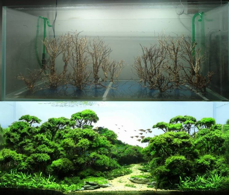 Elegant Before And After Freshwater Aquascape
